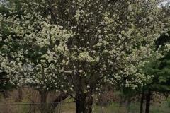 Spring-HamiltonTree