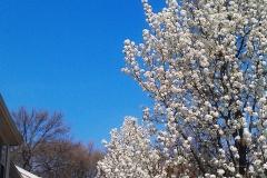 Rville-Spring3