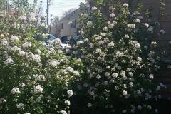 Spring-Woodstown10