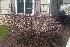 Spring-Woodstown6