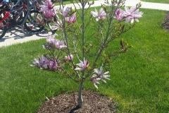 Spring-Woodstown8