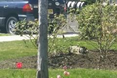 Spring-Woodstown9